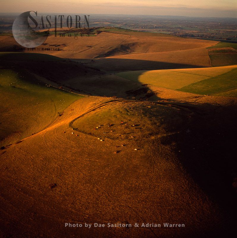 Iron Age Hill Fort On Mount Caburn, With Cattle Grazing, East Sussex