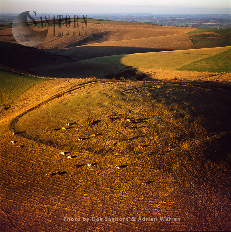 Iron Age Hill Fort On Mount Caburn With Cattle Grazing, East Sussex