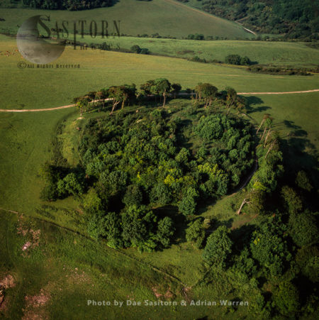Chanctonbury Ring, Chanctonbury Hill, South Downs, West Sussex