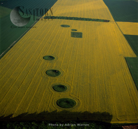 Barrows At North Down In Rape Field, Near Calstone Wellington, Wiltshire