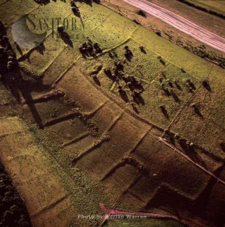 Bronze Age Fields And Homestead Near Cerne Abbas, Dorset