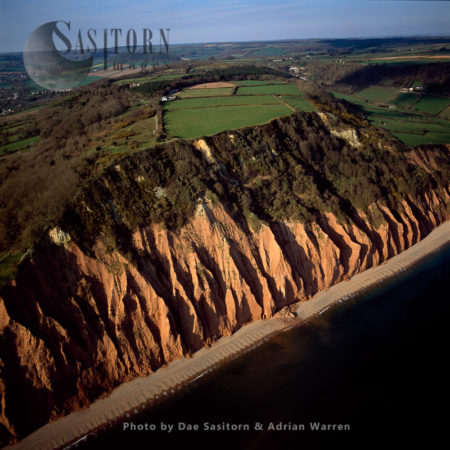 Salcombe Hill Red Cliffs, East Of Sidmouth, Devon