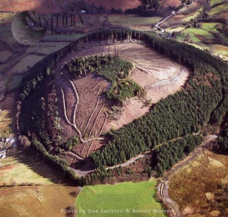 Pen-y-Dinas Forestry - Llandudno, Conwy