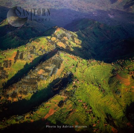 Intensive Agriculture On Virunga Foothills, Rwanda