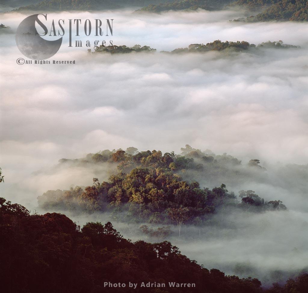 Misty Forest Dawn, Nyungwe Forest, Rwanda