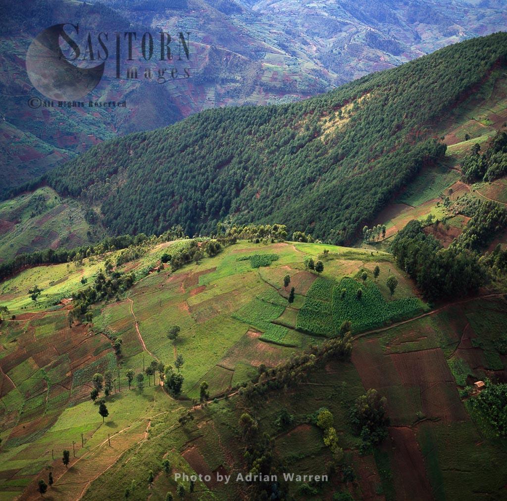 Deforestration And Intensive Agriculture On Virunga Foothills, Rwanda