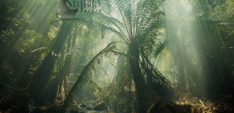 Forests And Rainforests
