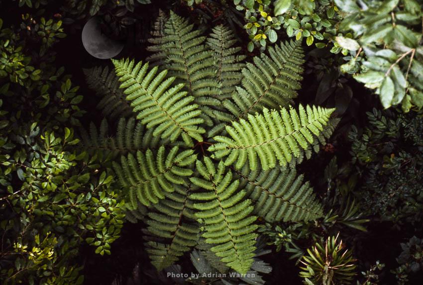 Tropical Rainforest Showing Cooper's Tree Fern, Queensland, Australia