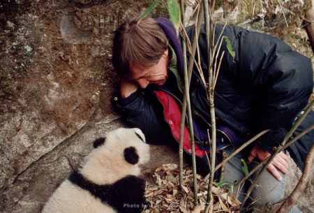 Giant Panda With Adrian Warren, Underfoot, Research, Qinling Mts. China, Shaanxi, China, 1993