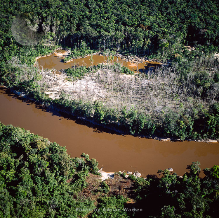 Dead Trees, Mining Damage, (Mazaruni Upstream From Kamarang), Upper Mazaruni District, Guyana