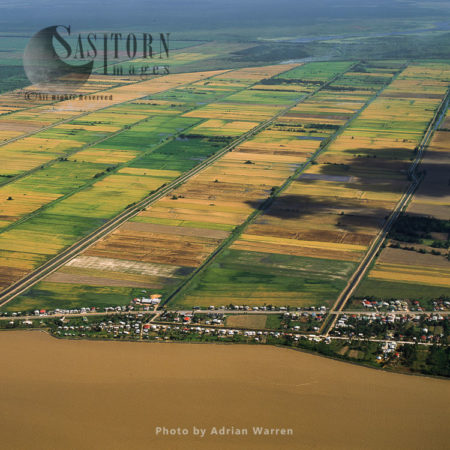 Sugar Cane Fields, Essequibo Mouth, Guyana