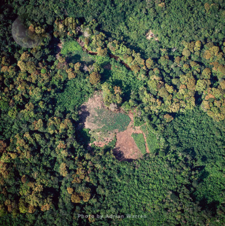 Amerindian Manioc Gardens, Near Ireng River (Rio Mau), Rupununi District, Guyana