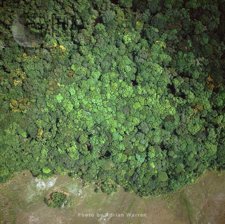 Tightly Fitting Forest Canopy, Karisparu,  Potaro-Siparuni Region, Guyana