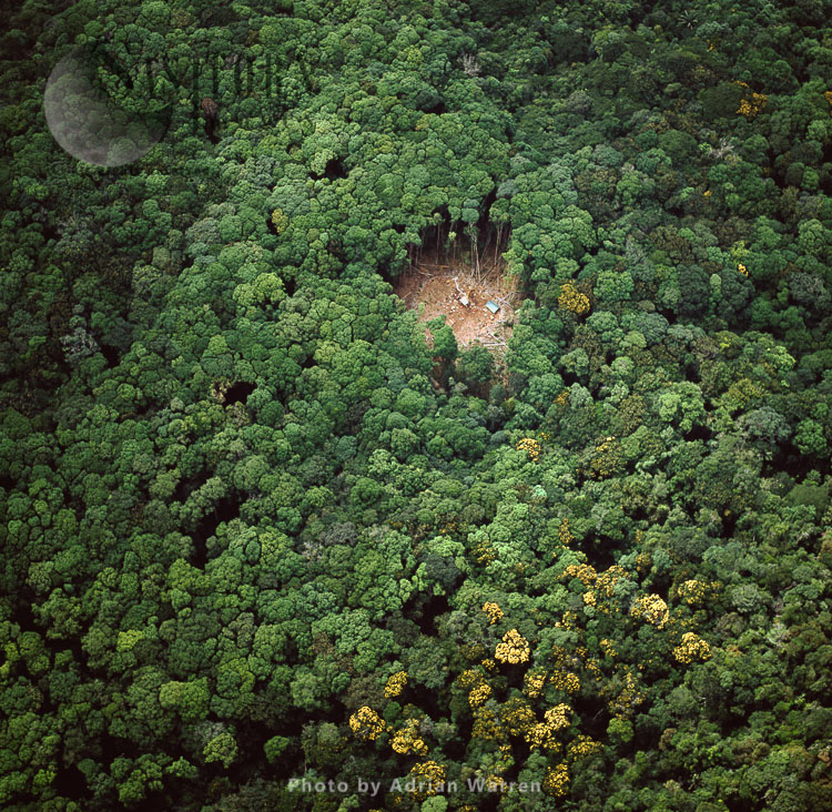 Forest Clearing & Camp, Karisparu, Potaro-Siparuni Region, Guyana