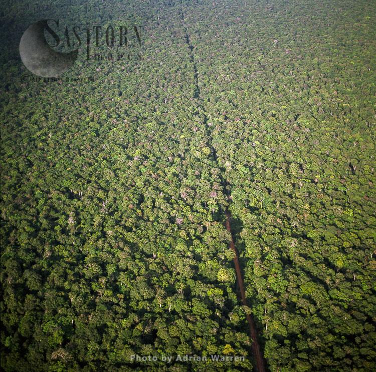 Lethem Road Through Forest, Amazon Rainforest, Guyana, South America