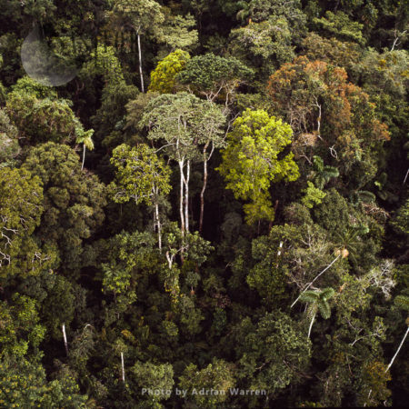 Rainforest, Suriname, South America