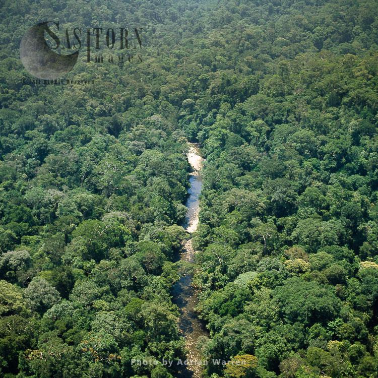 Ecuador Rainforest And River Cononaco – Part Of The Amazon Basin, Cononaco Area, South America