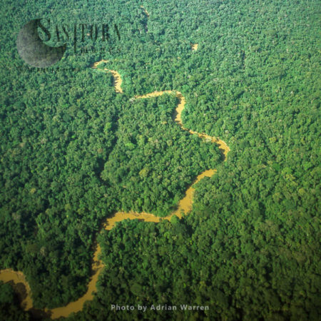 Ecuador Rainforest And River Cononaco - Part Of The Amazon Basin, Cononaco Area, South America