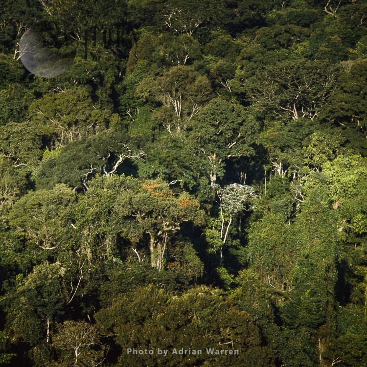 Rainforest, Suriname, South America