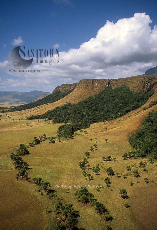 The Slope Of Mount Auyantepui (Auyantepuy, Devil's Mountain), Home Of The Angel Falls, Venezuela