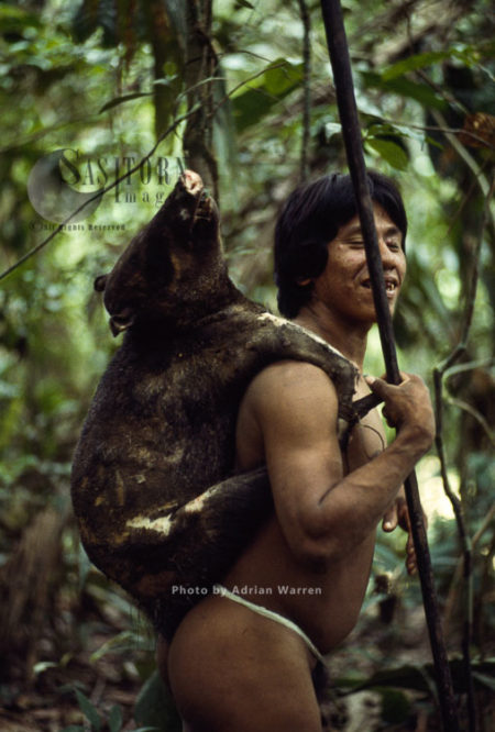 Waorani Indians : With A Piccary After A Sucessful Hunting, Rio Cononaco, Ecuador, 1983
