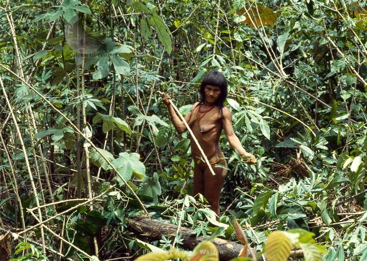 Waorani Indians, women gathering food and firewood,, Rio Cononaco, Ecuador, 1983