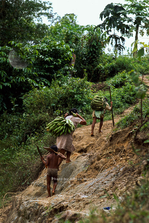 Waorani Indians, Carrying Bananas Home, Rio Cononaco, Ecuador, 1993