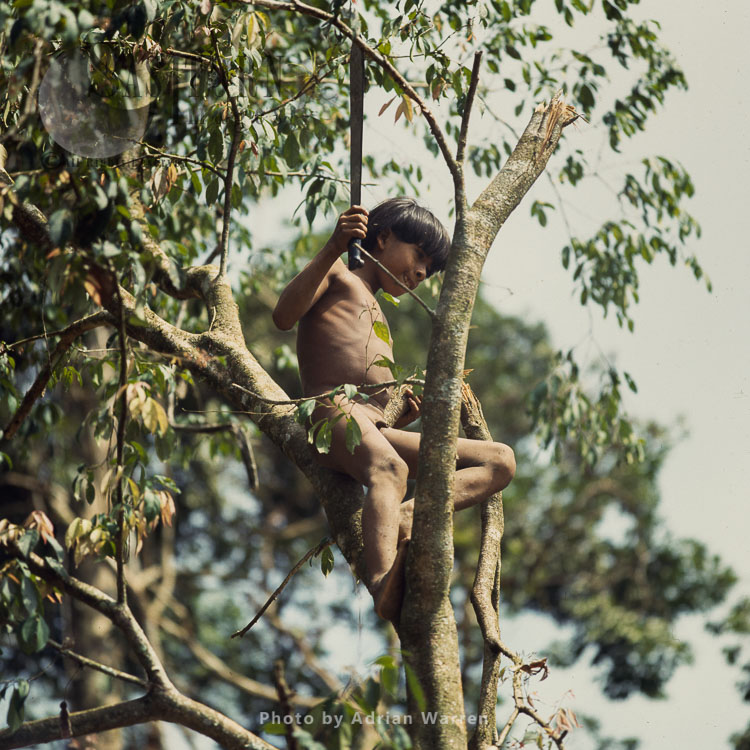 Waorani Indians, A Boy On Tree, Rio Cononaco, Ecuador, 1983