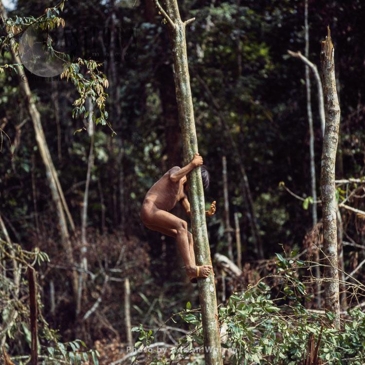 Waorani Indians, Boy Climbing A Tree, Rio Cononaco, Ecuador, 1983