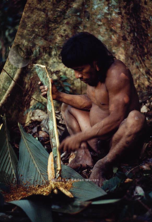 Waorani Indians: Curare Preparation, Rio Cononaco, Ecuador, 1983