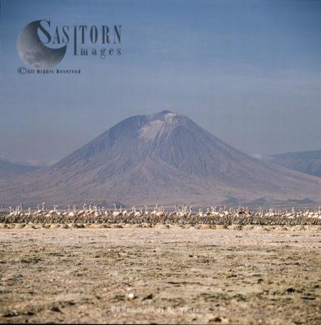 Lesser Flamingo (Phoeniconaias Minor) Nesting Colony, Lake Natron, African Rift Valley, Tanzania