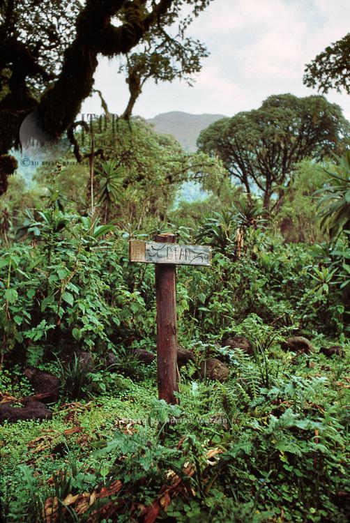 Dian Fossey's Grave, Karisoke Research Centre, Virunga Volcanoes, Rwanda