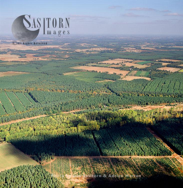 Thetford Forest, Norfolk