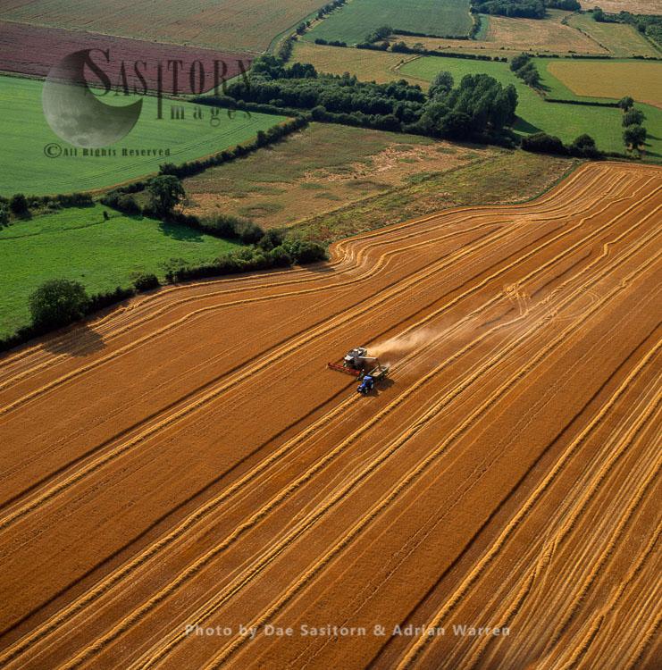 Hay Cutting, Working Fields, Wiltshire