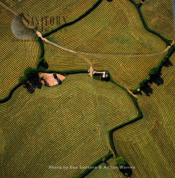Fields-summer Grass Cut For Silage, Wiltshire