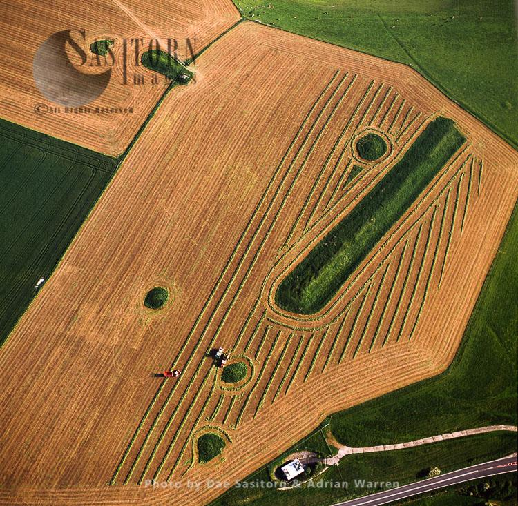 Harvesting At Long Bredy Bank Barrow, Neolithic Burial Mound, Long Bredy, Near Dorchester, Dorset