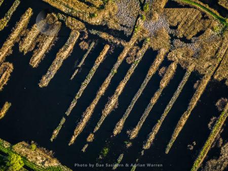 Peat Extraction Sites, Shapwick Heath