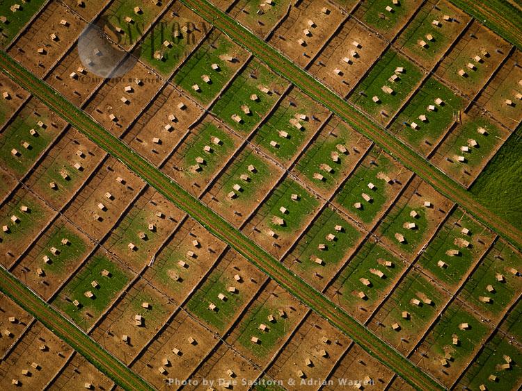 Free-range Chicken Farm, Near Badminton, Gloucestershire