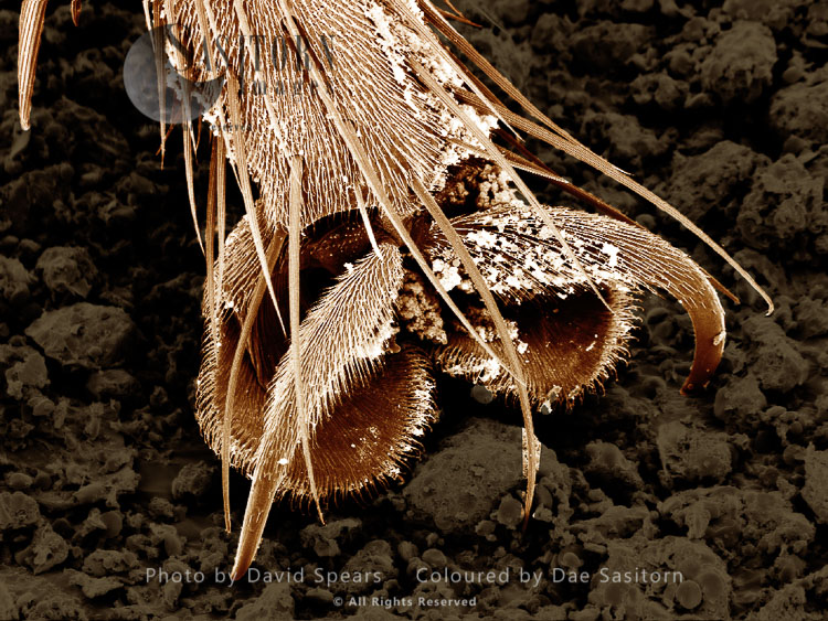 SEM: A Foot Of A House Fly, Musca Domestica; Magnification Unknown