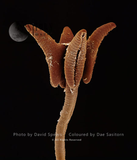 Tapeworm From Shark