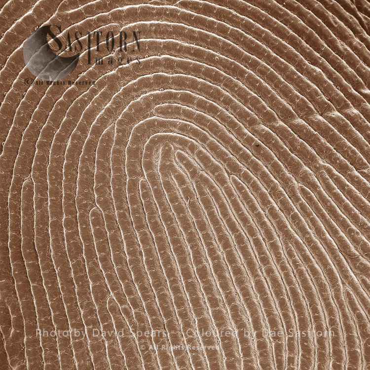 SEM: Human Finger Tip Print; Magnification X 30 At A4 Print Size