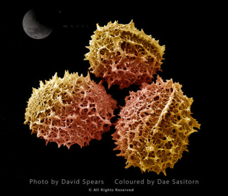 Photographs by David SPEARS