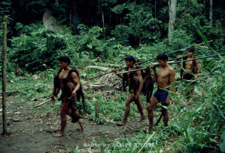 Waorani Indians: Moving Into New Territory Always Produces More Successful Hunts, Kedemeneno, 1980, Ecuador