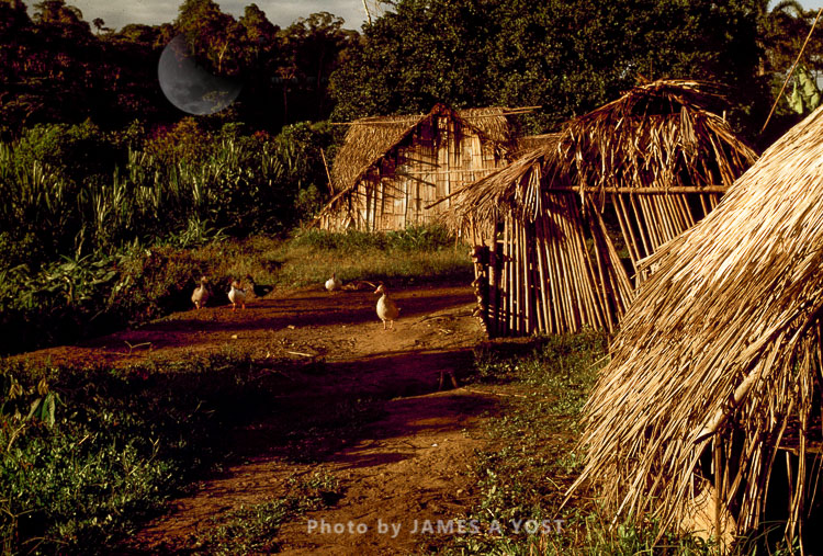 Waorani Indians, Housing Styles Have Varied In Waorani Culture Since Pre-contact Times, Tewaeno, Ecuador, 1973