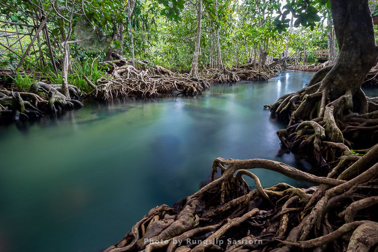 Pom Klong Song Nam, a beautiful forest stream in Krabi province, Thailand.