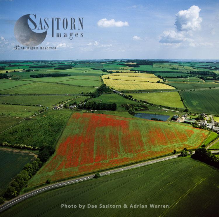 Poppy Fields Near Hexham, Northumberland, England