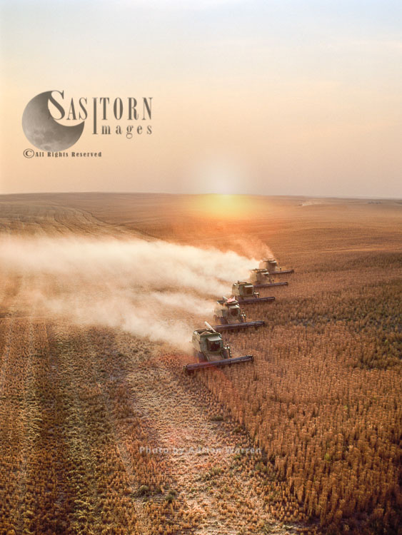 Wheat Harvesting, Montana, USA