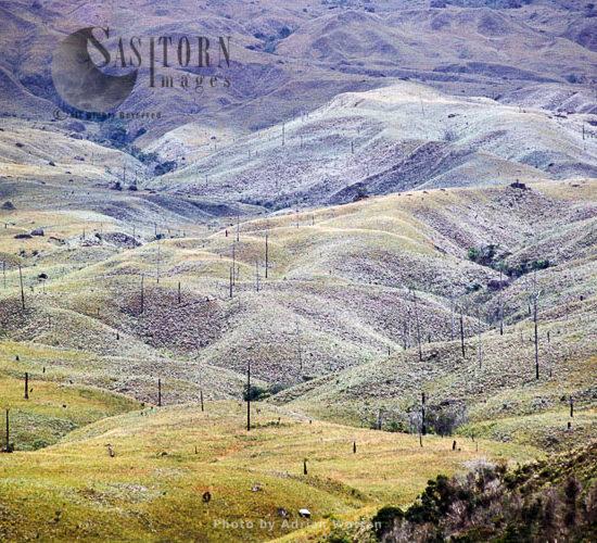 Skeleton Forest (damaged From Forest Fire) On La Gran Sabana, Canaima National Park, Bolívar State, Venezuela