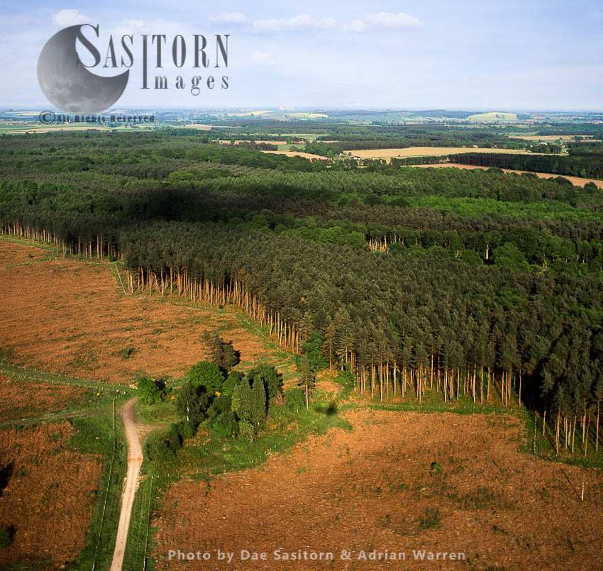 Sherwood Forest With Cottam Power Station In Distance, Nottinghamshire