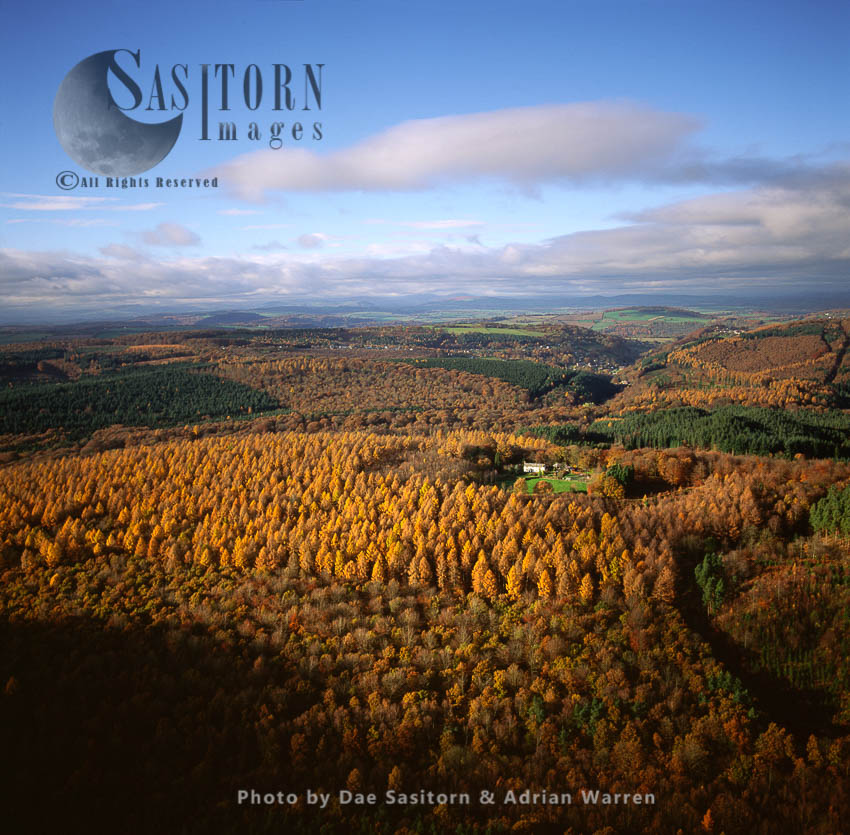 Forest Of Dean In Autumn, Gloucestershire